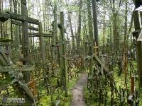 """""""las krzyży"""" - Św. Góra Grabarka"""