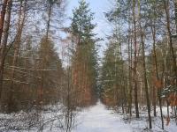 droga leśna w dzielnicy Jeleń