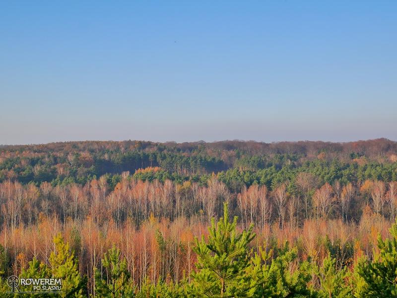 Widok na lasy z hałdy Kostuchna