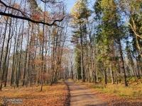Piękna polska złota jesień w Lasach Murckowskich