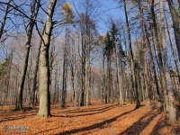 Jesień w Lasach Murckowskich