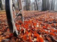 Droga z liści
