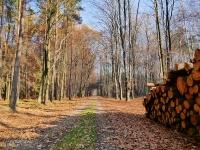 ... takie leśne klimaty