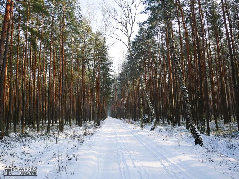 Lasy w Ciężkowicach