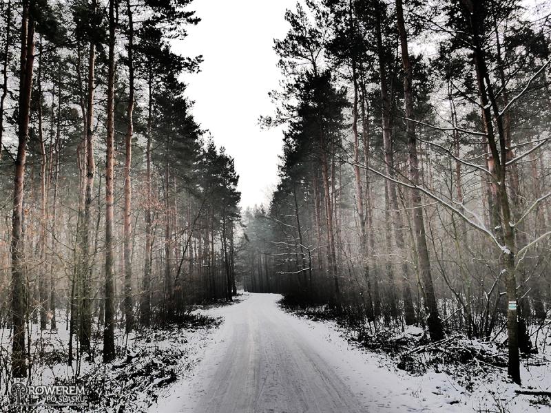 droga leśna w okolicach Łęgu