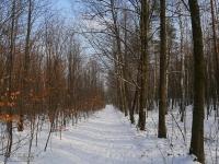 Droga leśna przed Kamieniołomem Gródek