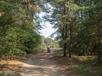 Leśne dukty Załęczańśkiego Parku Krajobrazowego