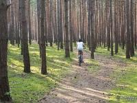 Leśny dojazd na Górę Św. Genowefy