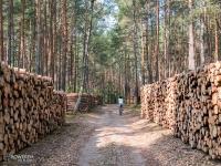 Lasy Załęczańskiego Parku Krajobrazowego