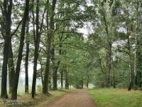 Lasy nad Górną Liswartą