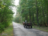 Furmanka - praktyczny środek transportu na wsi