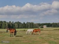 i konie