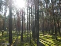 Śląskie lasy