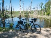 Uroczysko Buczyna - zatopione drzewa