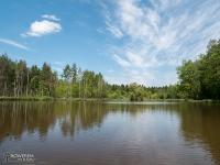 Śródleśny staw w Mikołowie