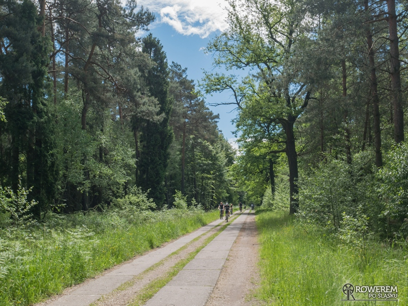 Czteropasmówka w Lasach Pszczyńśkich