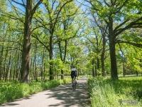 Dobre asfaltowe drogi Lasów Pszczyńskich