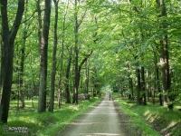 Lasy Pszczyńskie