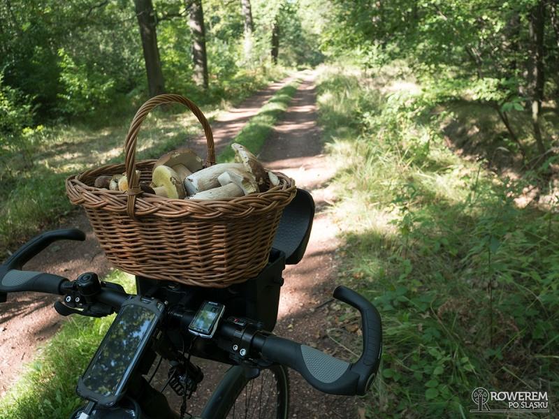 Kosz grzybów z Lasów Rudzkich
