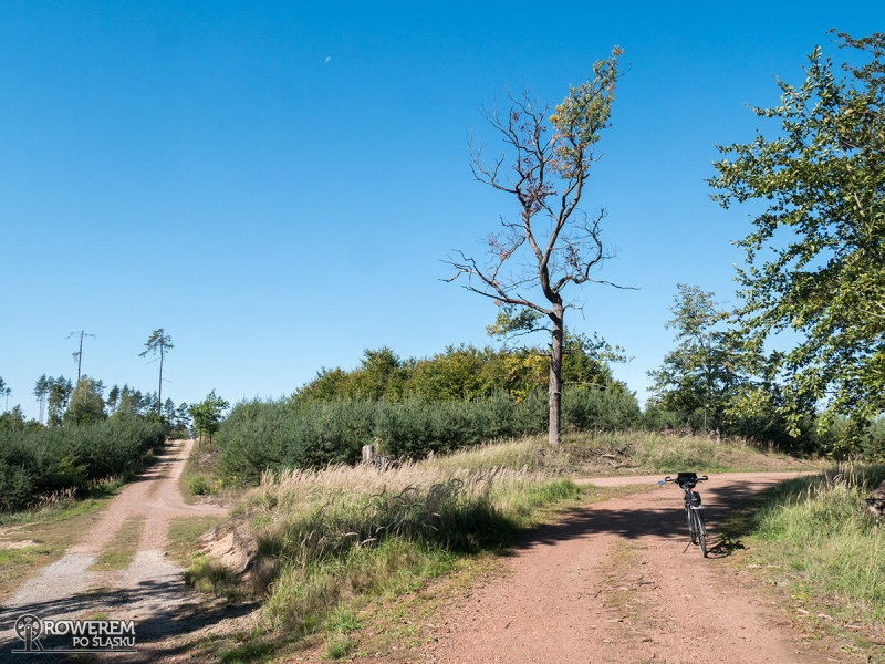Krajobrazy lasu