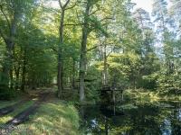 Hubertus w lasach między Rudami a Jankowicami