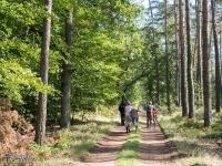 Lasy Rudzkie jest pełen rowerzystów...
