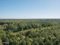 Widok z wiezy na Lasy Rudzkie