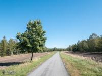 Asfaltowa droga pośrodku lasu