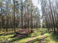 Dróżka łącząca Barachowską i Zakazaną