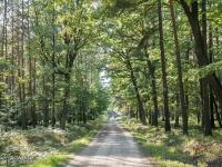 Dobre leśne drogi