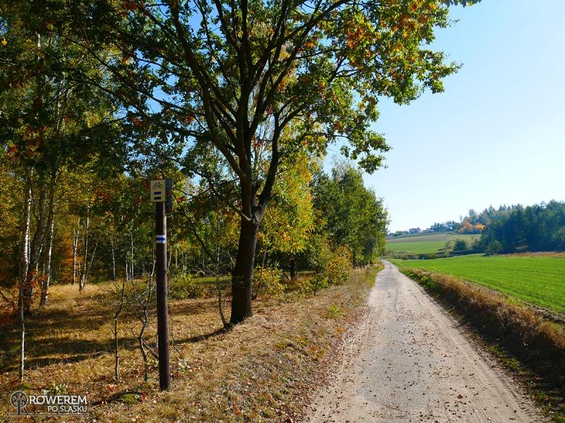 Szlaki rowerowe w Arboretum Bramy Morawskiej