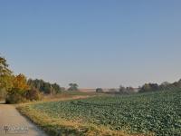 Pagórkowate tereny rolnicze w Raciborzu