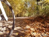 Jesień w Arboretum Bramy Morawskiej