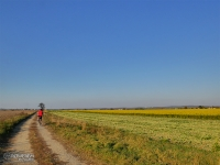 Polne drogi na Raciborszczyźnie