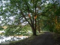 Drogi leśne Pojezierza Palowickiego