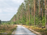 Droga szutrowa na Pojezierzu Palowickim