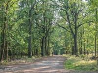 Droga leśna w Żorach