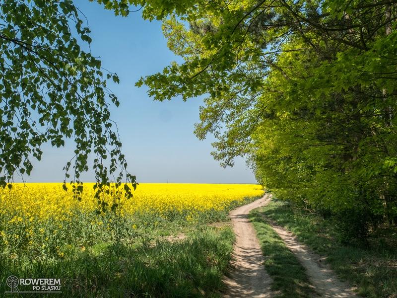 Polna droga do Pyskowic