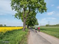 Żółte pola rzepaku w Gliwicach
