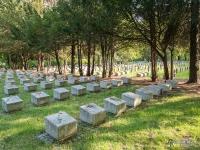 Cmentarz żołnierzy radzickiech w Gliwicach