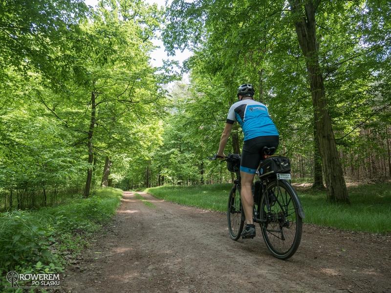 Lasy Rudzkie na rowerze