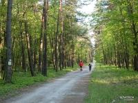 Droga leśna prowadząca do Rud