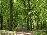 Dobre rowerowe drogi w lasach Rudzkich