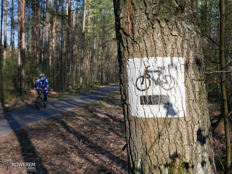 Czarny szlak rowerowy w Lasach Murckowskich