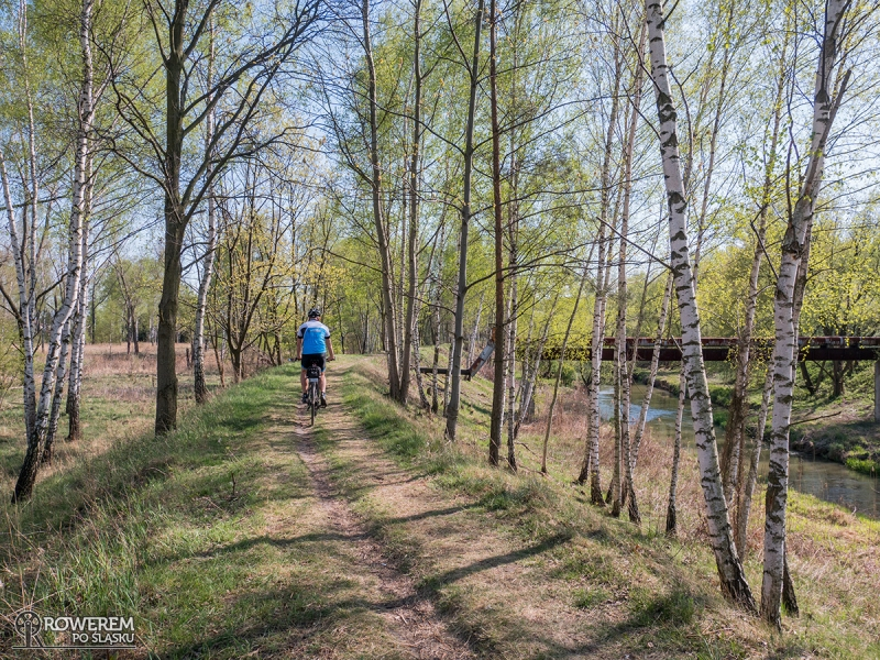 Ścieżka wzdłuż Białej Przemszy w Sosnowcu
