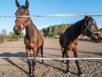 Stadnina koni między kamieniołomem Gródek a Sadowa Góra