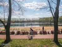 Stawiki w Sosnowcu