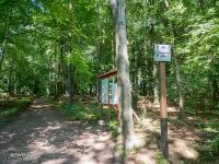 Skrzyżowanie szlaków w lasach segieckich
