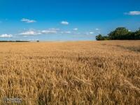 Krajobrazy ziemi tarnogórskiej