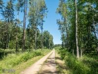 Dobre drogi leśne